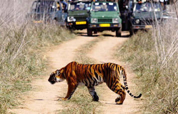 Corbett Package Tours